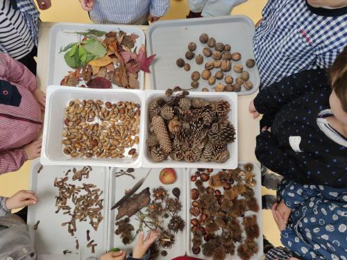 Les trésors de l'automne en petite section.